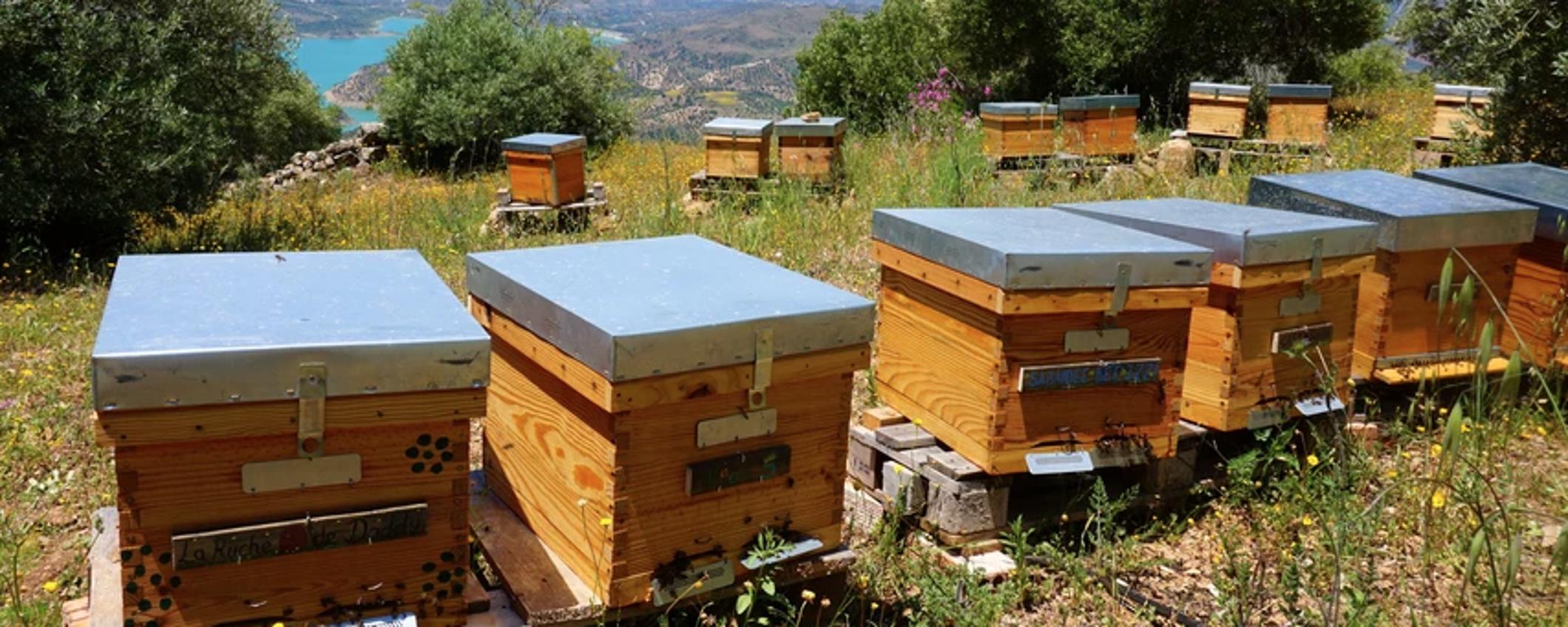 Colmenas Ladrón de miel